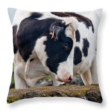 Cow With Head Turned Throw Pillow