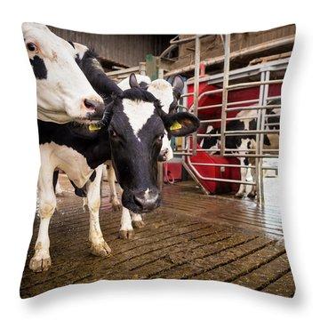 Bos Taurus Throw Pillows