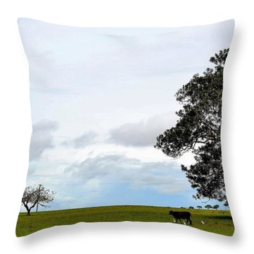 Cows And Shack - Australia Throw Pillow