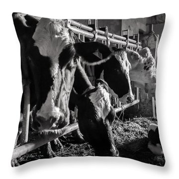 Throw Pillow featuring the photograph Cows In The Barn2 by Joseph Amaral