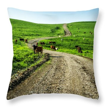 Cows On The Road Throw Pillow