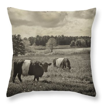 Cows Rockport Maine Throw Pillow