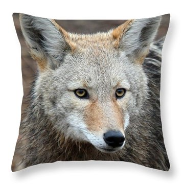 Throw Pillow featuring the photograph Coyote by Athena Mckinzie
