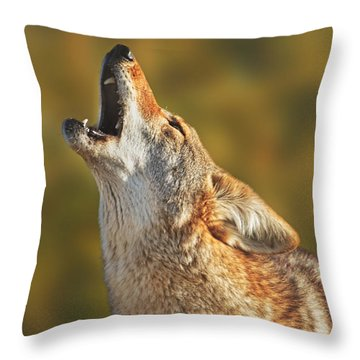 Coyote  Throw Pillow by Brian Cross