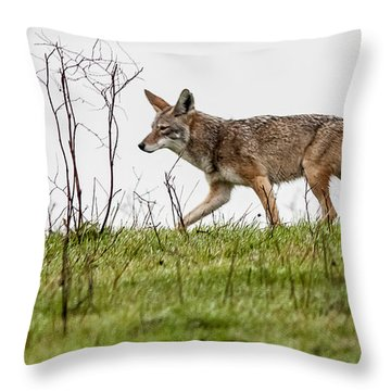 Coyote Throw Pillow by Brian Williamson
