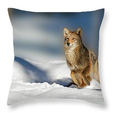 Coyote Go Go Go Throw Pillow