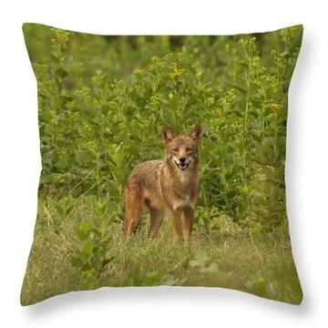 Coyote Happy Throw Pillow