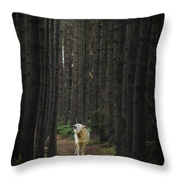 Coyote Howling In Woods Throw Pillow by Dan Friend