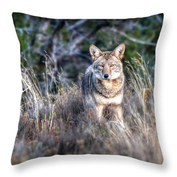 Coyote Stare Down Throw Pillow