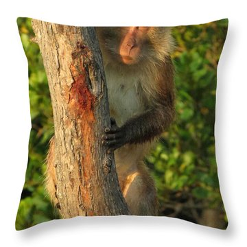 Crab Eating Macaque Throw Pillow by Ramona Johnston