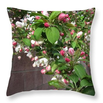 Crabapple Blossoms And Wall Throw Pillow