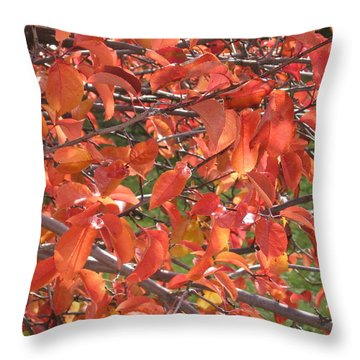 Crabapple Throw Pillow by Kimberly Maxwell Grantier