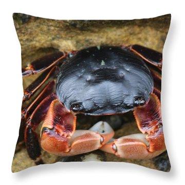 Crabby Pants  Throw Pillow