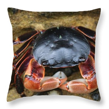 Throw Pillow featuring the photograph Crabby Pants  by Christy Pooschke