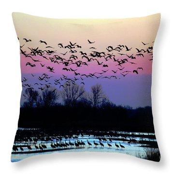 Crane Watch 2013 Throw Pillow by Elizabeth Winter