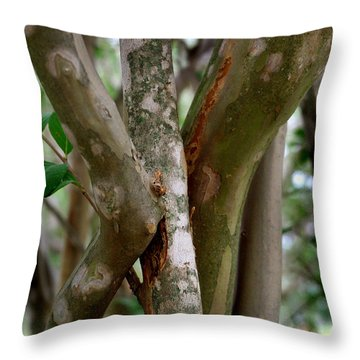 Crape Myrtle Branches Throw Pillow by Peter Piatt
