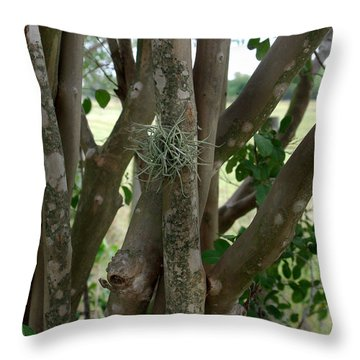 Throw Pillow featuring the photograph Crape Myrtle Growth Ball by Peter Piatt