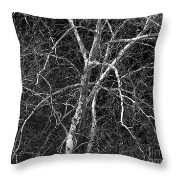 Throw Pillow featuring the photograph Crazy Camouflage Tree by Kristen Fox