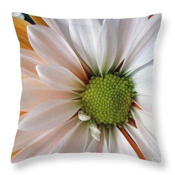 Throw Pillow featuring the photograph Creamsicle by Jean OKeeffe Macro Abundance Art