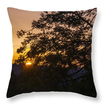 Creeping Over Throw Pillow by Bob Phillips