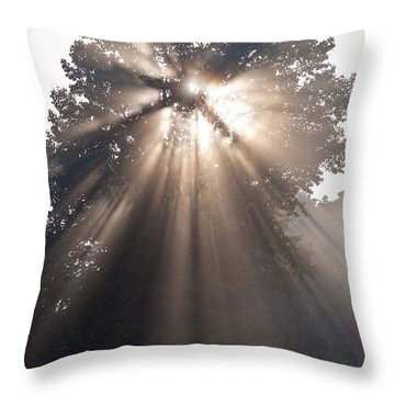 Crepuscular Rays Coming Through Tree In Fog At Sunrise Throw Pillow