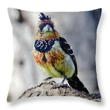 Crested Barbet Throw Pillow