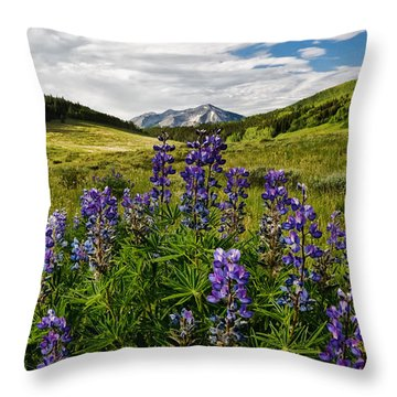 Throw Pillow featuring the photograph Crested Butte Lupines by Ronda Kimbrow