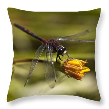 Throw Pillow featuring the photograph Crimson-ringed  White Face Dragonfly On Flower by Lee Kirchhevel