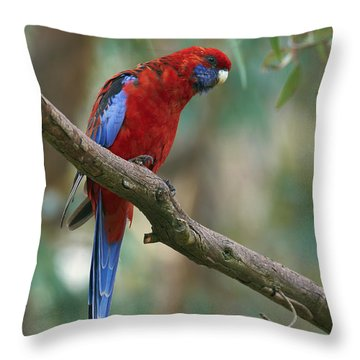 Crimson Rosella Parrot Canberra Throw Pillow