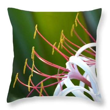 Throw Pillow featuring the photograph Crinum Lily by Darla Wood