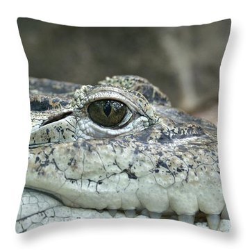 Throw Pillow featuring the photograph Crocodile Animal Eye Alligator Reptile Hunter by Paul Fearn
