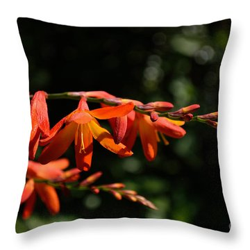 Crocosmia 'dusky Maiden' Flowers Throw Pillow by Scott Lyons