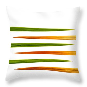 Crocosmia Leaves On White Background Throw Pillow by Carol Leigh