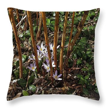 Throw Pillow featuring the photograph Crocuses And Raspberry Canes by Donald S Hall