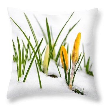 Crocuses In Snow Throw Pillow by Elena Elisseeva
