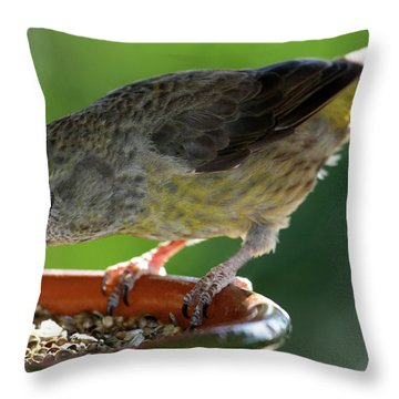 Crossbill Loxia Curvirostra Female Throw Pillow