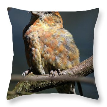 Crossbill Loxia Curvirostra Male Spain Throw Pillow