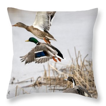 Crowded Flight Pattern Throw Pillow by Mike Dawson