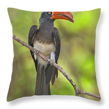 Crowned Hornbill Perching On A Branch Throw Pillow