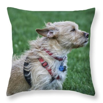 Throw Pillow featuring the photograph Cruz Enjoying A Warm Gentle Breeze by Thomas Woolworth