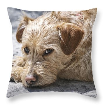 Throw Pillow featuring the photograph Cruz You Looking At Me by Thomas Woolworth