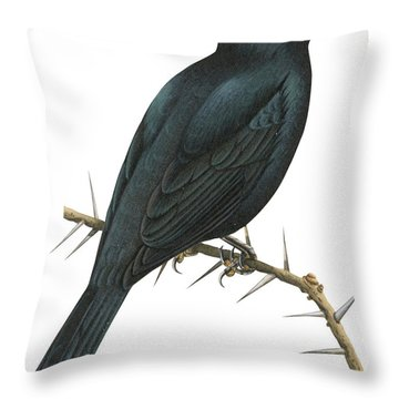 Cuckoo Shrike Throw Pillow by Anonymous
