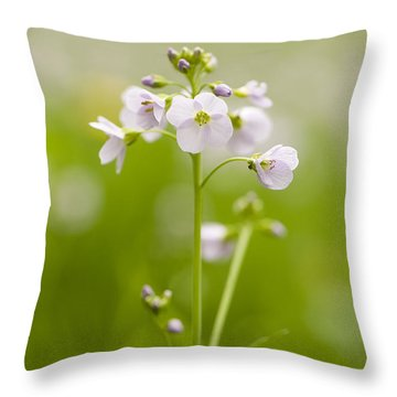 Cuckooflower Throw Pillow by Anne Gilbert