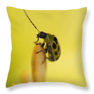 Cucumber Beetle Throw Pillow by David Yunker