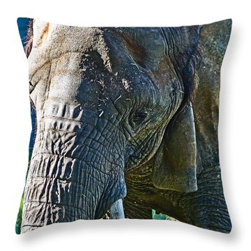 Cuddles In Search Throw Pillow