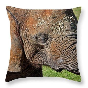 Cuddles Throw Pillow by Miroslava Jurcik