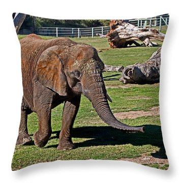 Cuddles Searching For Snacks Throw Pillow