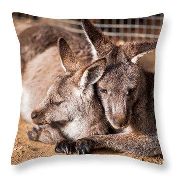 Cuddling Kangaroos Throw Pillow