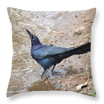 Cuervo Throw Pillow