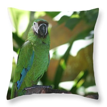 Curacao Parrot Throw Pillow